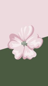Flower Backgrounds 4k
