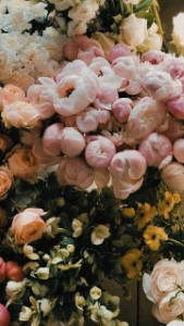 The Best Natural Flower Backgrounds