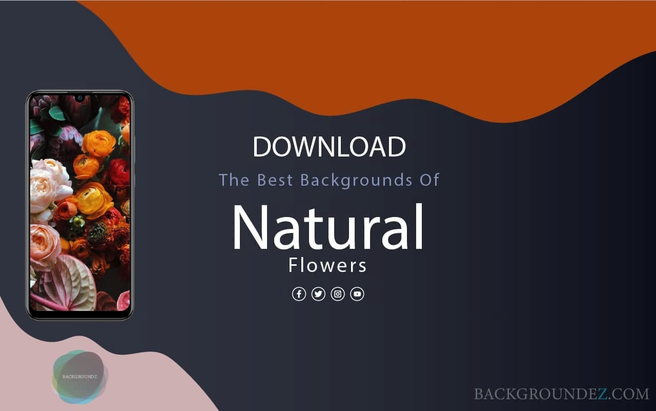 Top 40 Natural Flowers Wallpapers