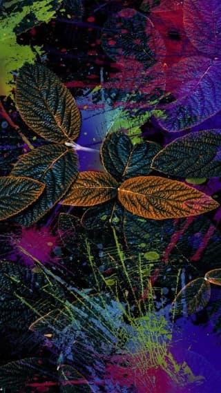 cool leaf wallpaper